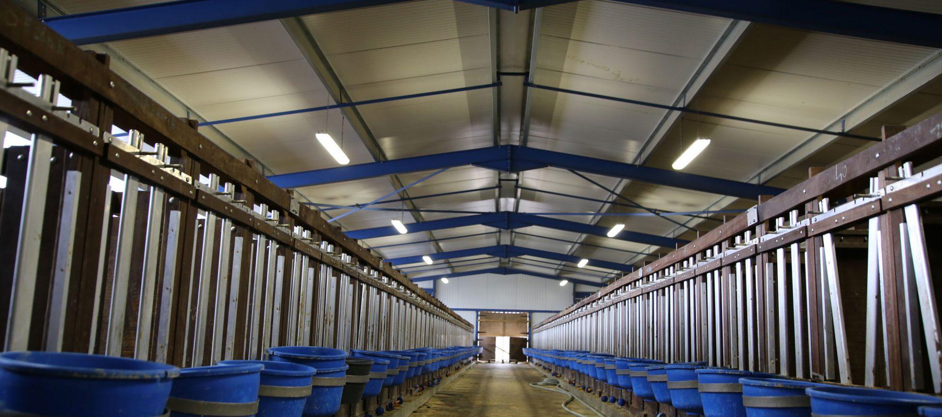 Filière authentique de veaux en Limousin