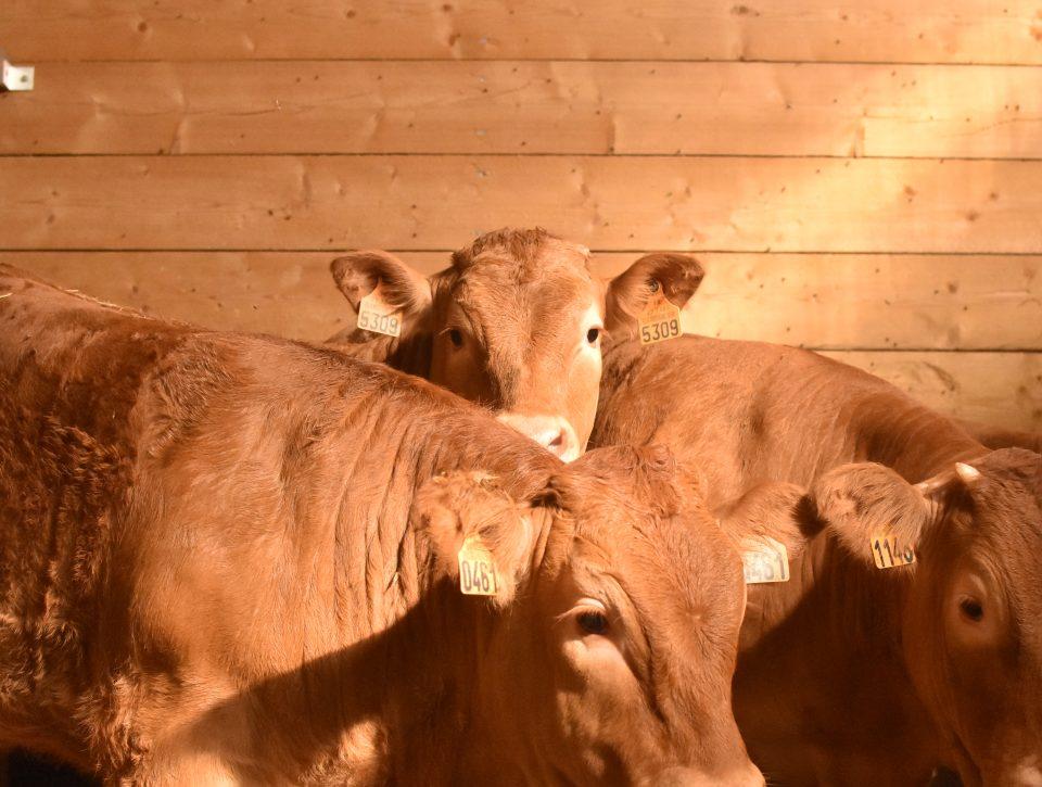 Filière de qualité créée par Serval et le Groupe Altitude dans le terroir du Limousin afin de produire une viande de qualité.